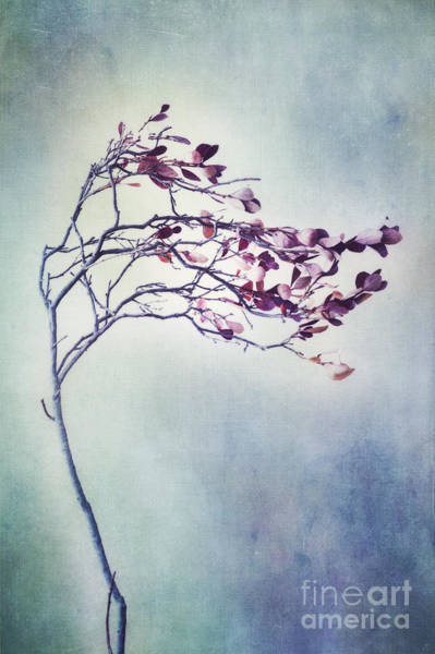 Wall Art - Photograph - Windswept by Priska Wettstein