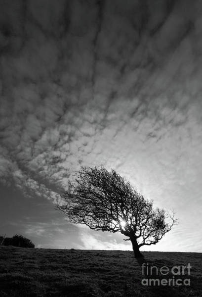 Photograph - Windswept Winter Blackthorn Tree by James Brunker