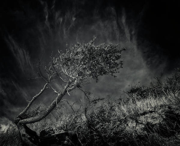 Photograph - Windworn Tree Of Falling by John Williams