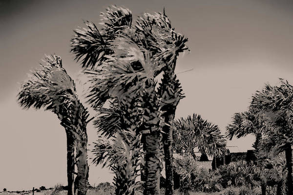 Photograph - Windy Day At Beach by Gina O'Brien