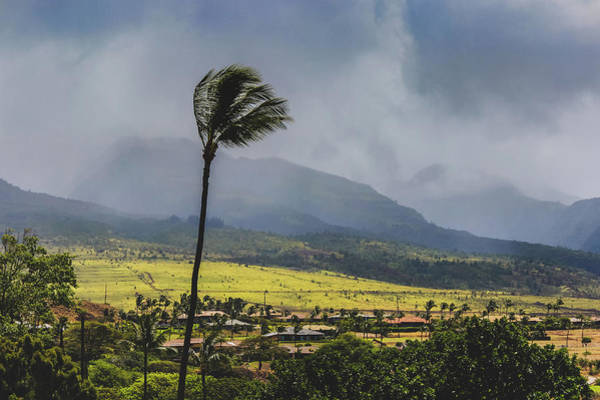 Photograph - Windy Day In Maui by Andy Konieczny