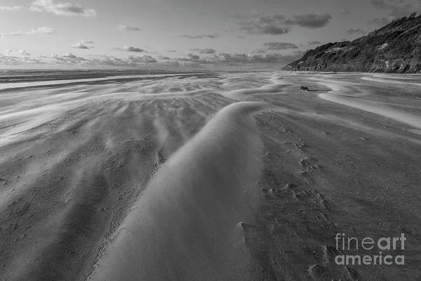 Oregon Dunes Photograph - Windy Day by Masako Metz