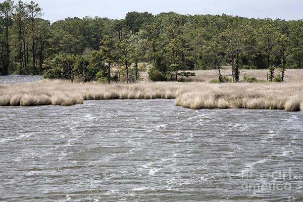 Photograph - Windy Saltwater Marsh On Roanoke Island In North Carolina by William Kuta