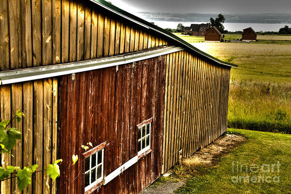Photograph - Wine Barn by William Norton