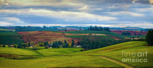 Photograph - Wine Country by Jon Burch Photography