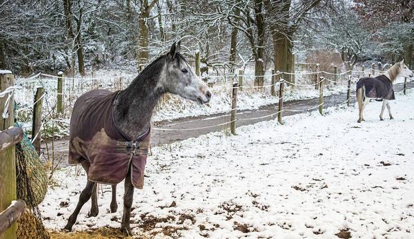Photograph - Winter Romance by Marina Usmanskaya