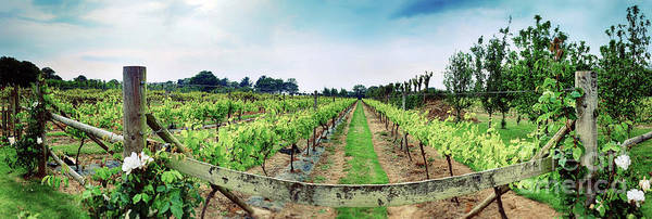 Photograph - winery panorama on Jersey Island by Ariadna De Raadt