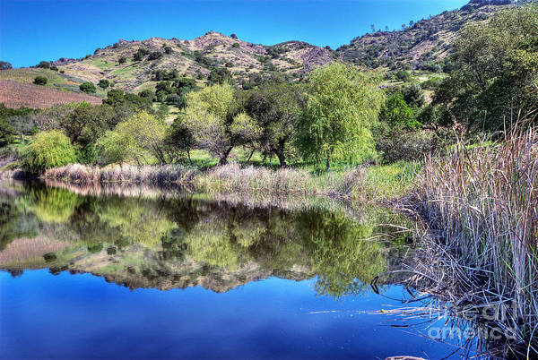 Photograph - Winery Pond Reflections by Norman Andrus