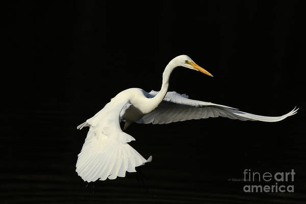 Photograph - Wing Grace by Deborah Benoit