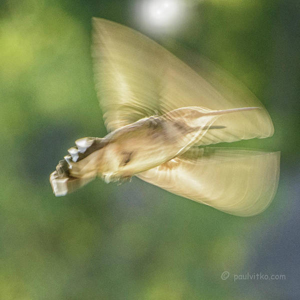 Photograph - Wing Shadow by Paul Vitko