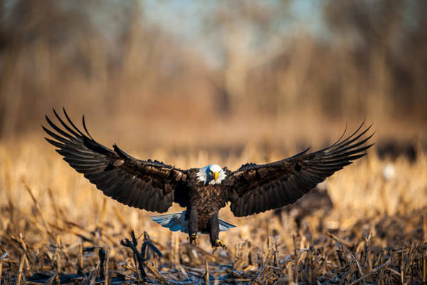 Photograph - Wing Span by Jeff Phillippi