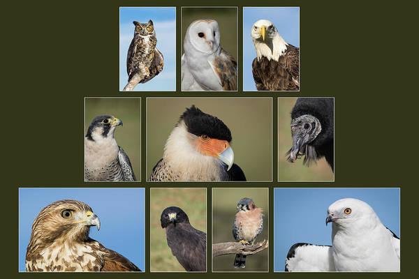 Photograph - Winged Ambassadors by Dawn Currie