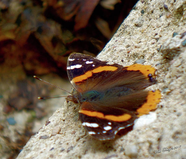 Photograph - Winged Beauty by Wild Thing