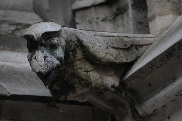 Photograph - Winged Gargoyle by Christopher Kirby