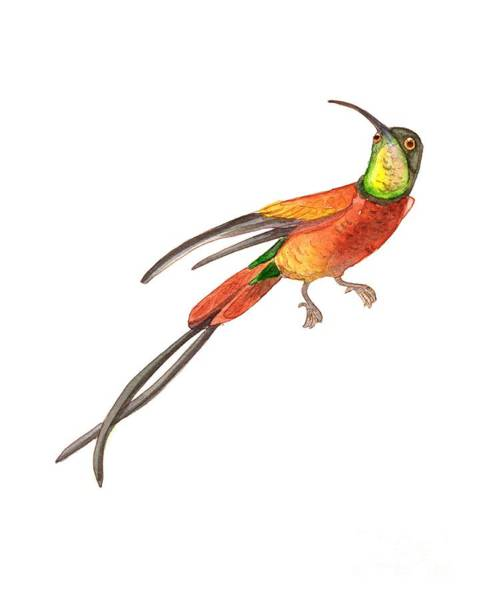 Wall Art - Painting - Winged Jewel 6, Watercolor Tropical Rainforest Hummingbird Red, Yellow, Orange And Green by Audrey Jeanne Roberts