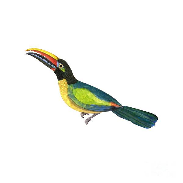 Wall Art - Painting - Winged Jewels 2, Watercolor Toucan Rainforest Birds by Audrey Jeanne Roberts