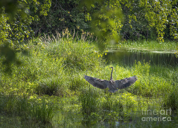 Photograph - Wings by Alana Ranney