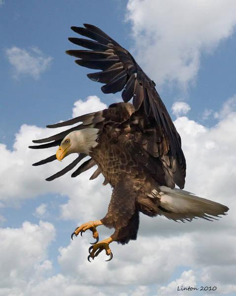 Wings Beak And Talons Art Print