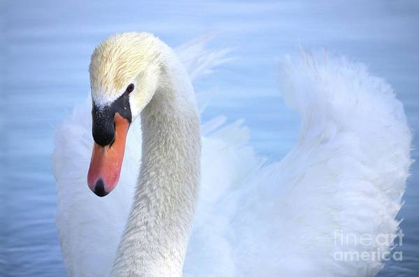 Angel Of Peace Photograph - Wings Of An Angel by Deb Halloran