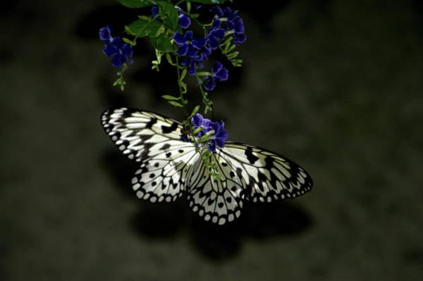 Wall Art - Photograph - Wings On A Flower by Alynne Landers