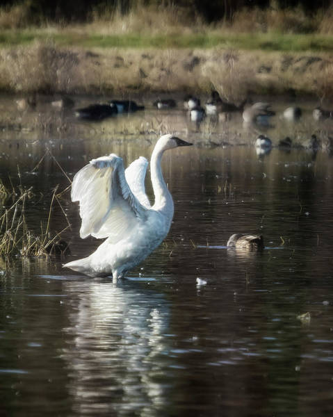 Photograph - Wings On Display by Belinda Greb