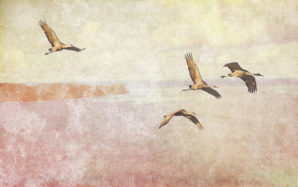 Photograph - Wings Over New Mexico I by Leda Robertson
