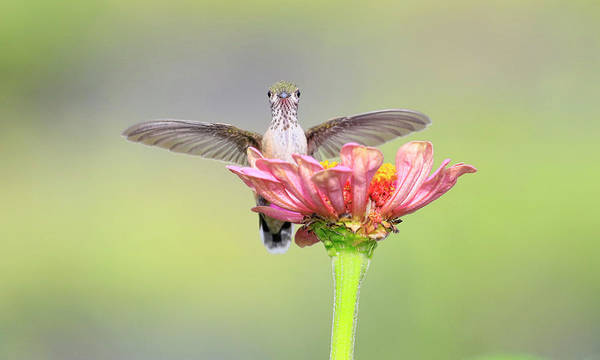 Wall Art - Photograph - Wings Spread Out On Flower by Steve McKinzie