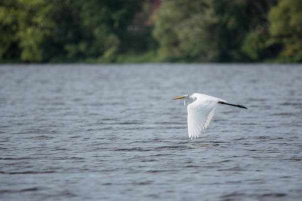 Photograph - Wingtips To Water by Jemmy Archer