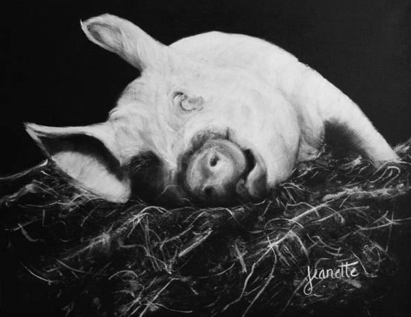 Painting - Winnie by Jeanette Fellows