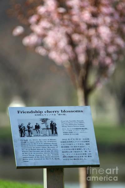 Photograph - Winona Minnesota Friendship Cherry Blossoms Plaque by Kari Yearous