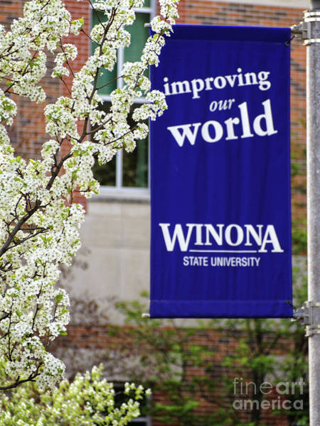 Photograph - Winona State University Wsu Banner With Blossoms by Kari Yearous