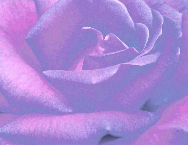 Wall Art - Mixed Media - Winsome Rose 1 by Will Borden