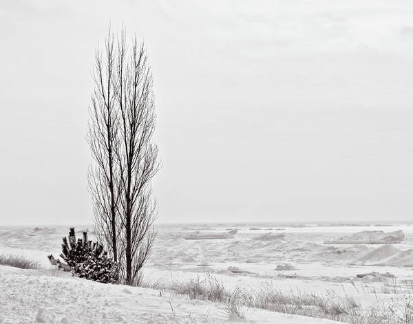 Wall Art - Photograph - Winter @ Oval Beach by Winnie Chrzanowski