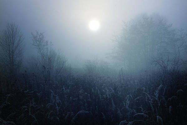 Atmospheric Photograph - Winter Afternoon - Poland by Cambion Art