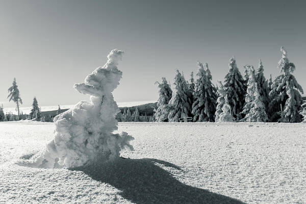 Photograph - Winter by Andreas Levi