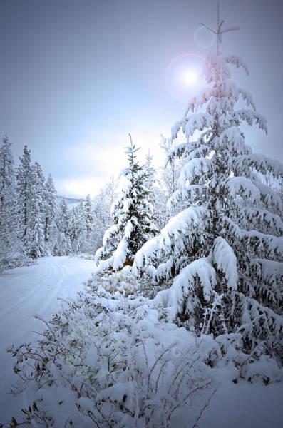 Photograph - Winter At Carmi Mountain by Tara Turner