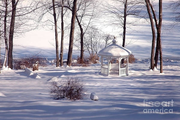 Wall Art - Photograph - Winter At Hawthorne Lake by Aneta  Berghane