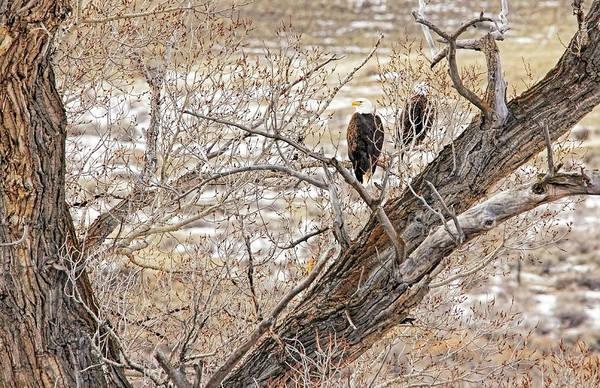 Wall Art - Photograph - Winter Bald Eagles by Jennie Marie Schell