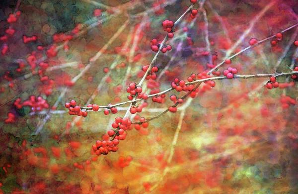 Photograph - Winter Berries 7950 Idp_2 by Steven Ward