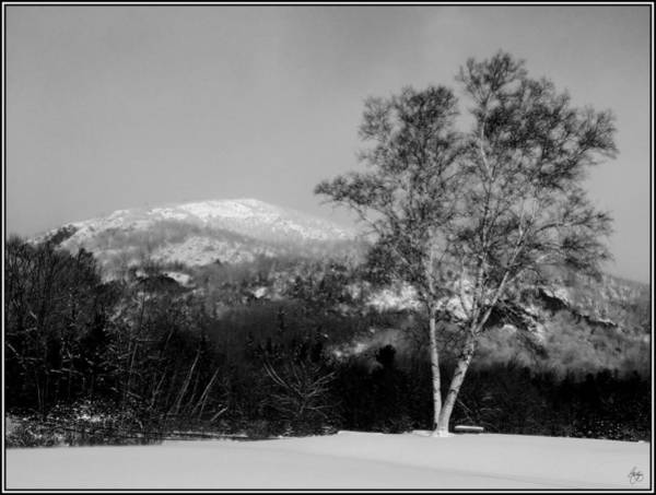 Photograph - Winter Birch Before Rattlesnake Mountain by Wayne King