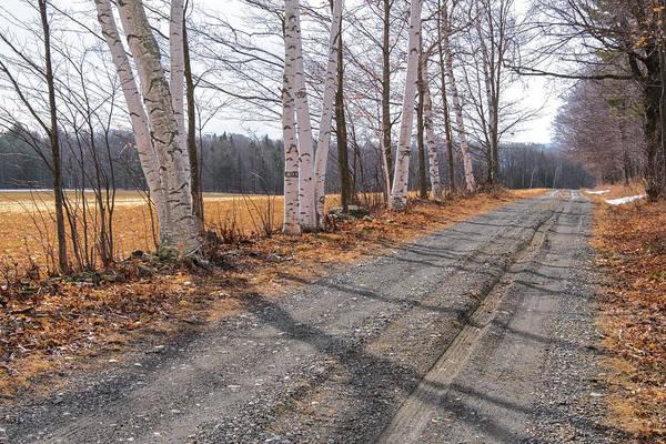 Photograph - Winter Birches by Tom Singleton
