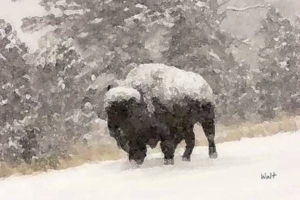 Digital Art - Winter Bison by Walter Chamberlain