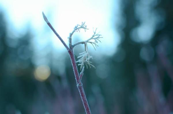 Photograph - Winter Blues by Fraida Gutovich
