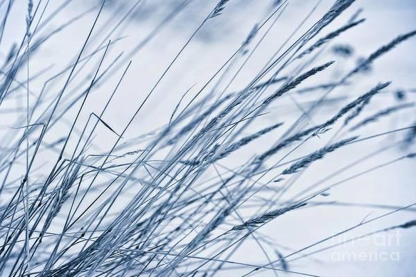 Hue Photograph - Winter Breeze by Priska Wettstein