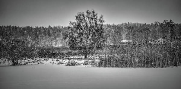 Photograph - Winter Bw #h2 by Leif Sohlman