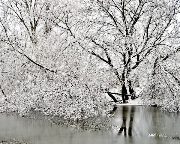 Photograph - Winter By Design by Susie Loechler