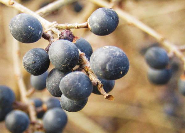 Photograph - Winter Can Bear Fruit by Robert Knight