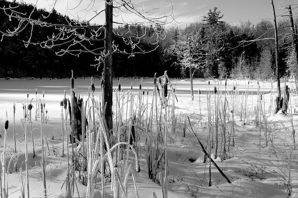 Photograph - Winter Cattails by Bob Grabowski