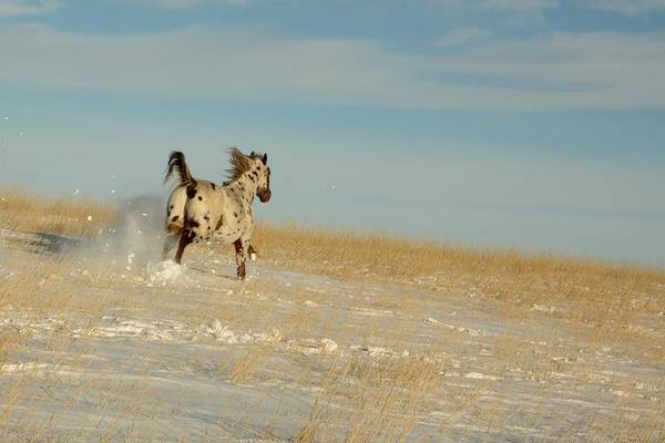 Photograph - Winter Charger by Bryan Smith