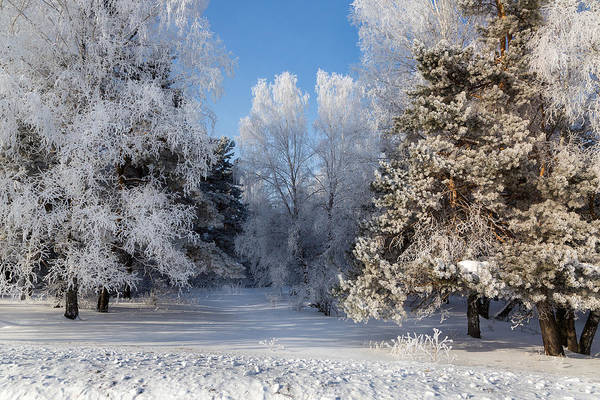 Photograph - Winter Charm by Victor Kovchin